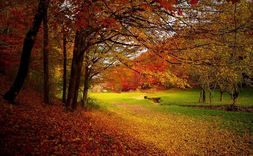 芸術の秋🎃